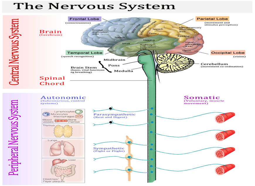neurological1